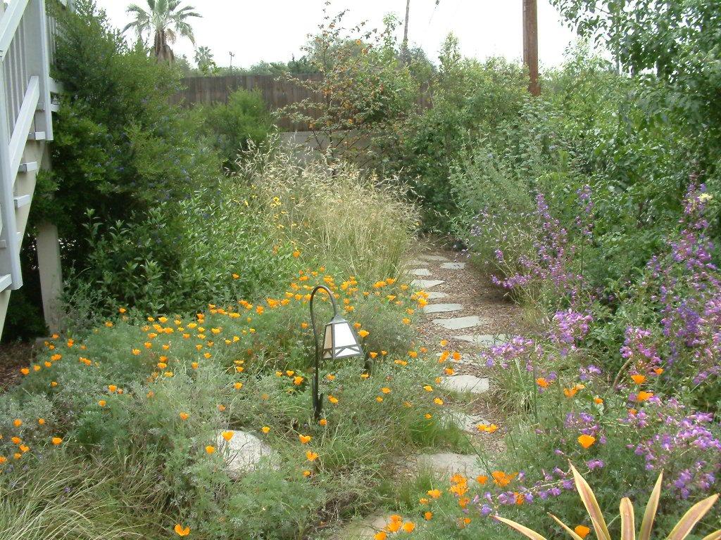 Gardens featuring penstemon hybrids for Garden design quiz