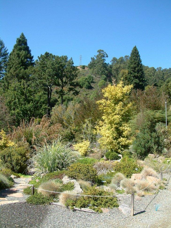 Yellow Stripe Amidst the Green, Designed by UC Berkeley Botanical Garden
