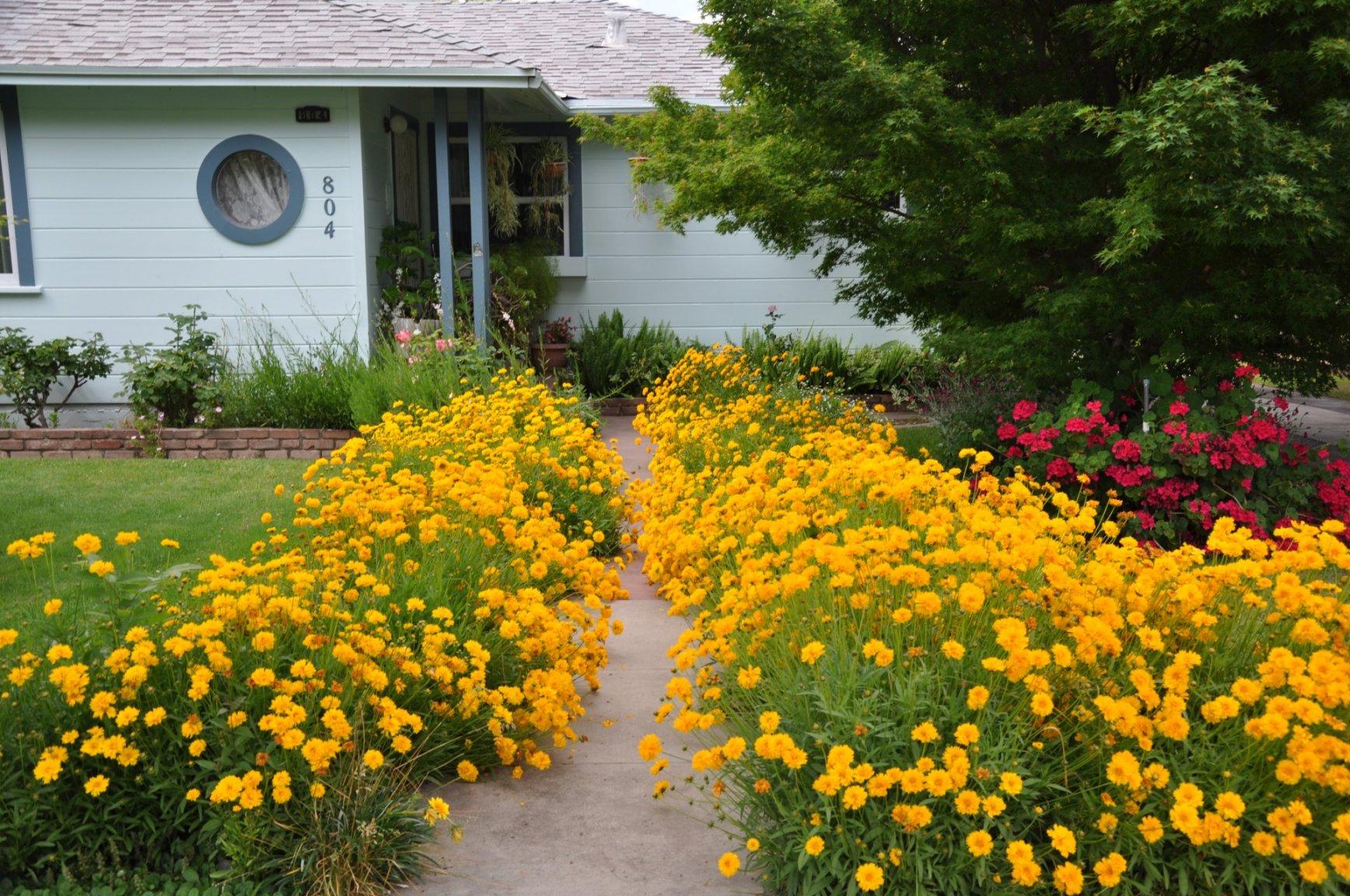 Желтый цветок на даче фото