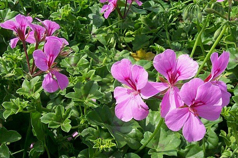 Balcony Garden Flowers Hanging Baskets