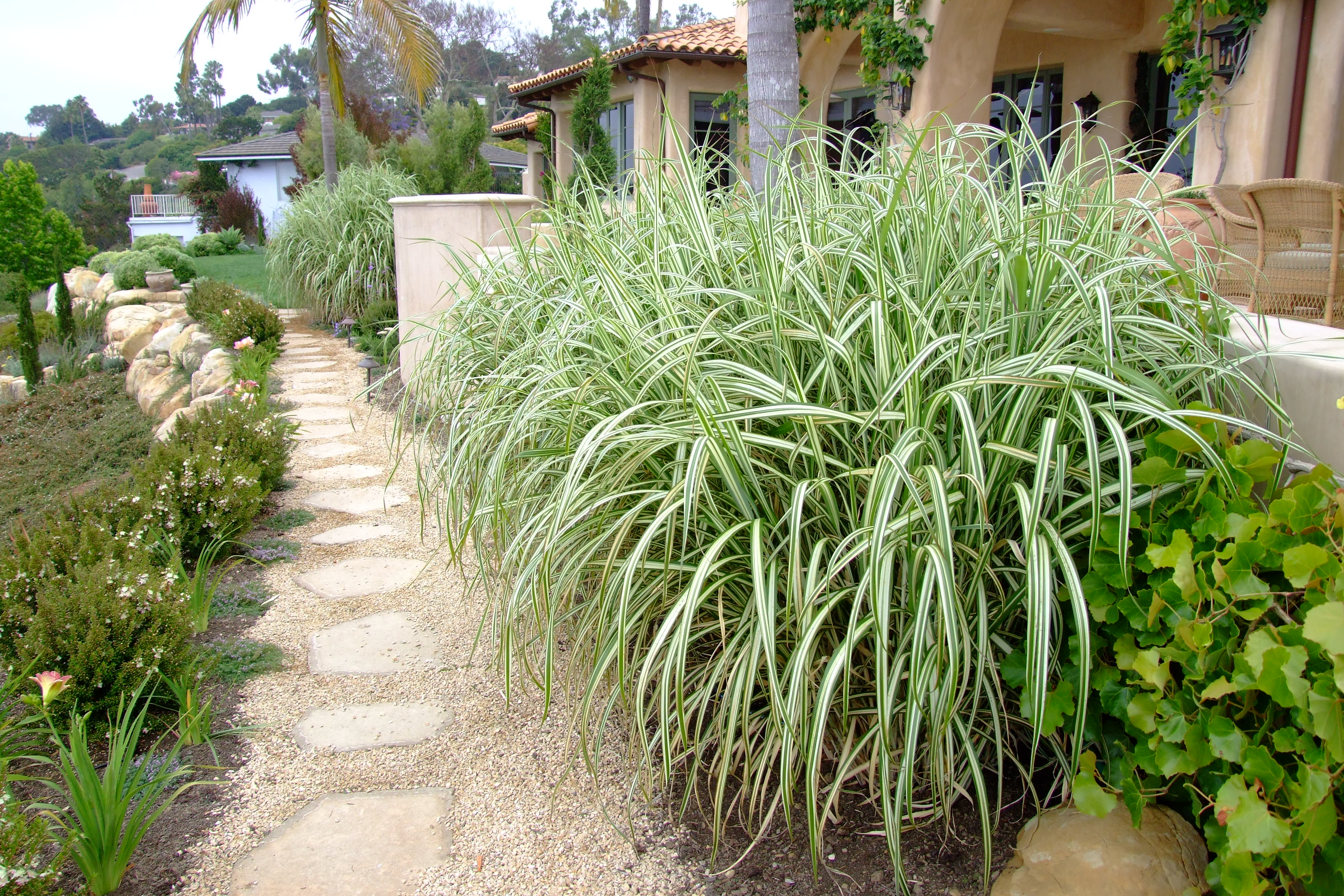 Image result for Japanese silver grass garden