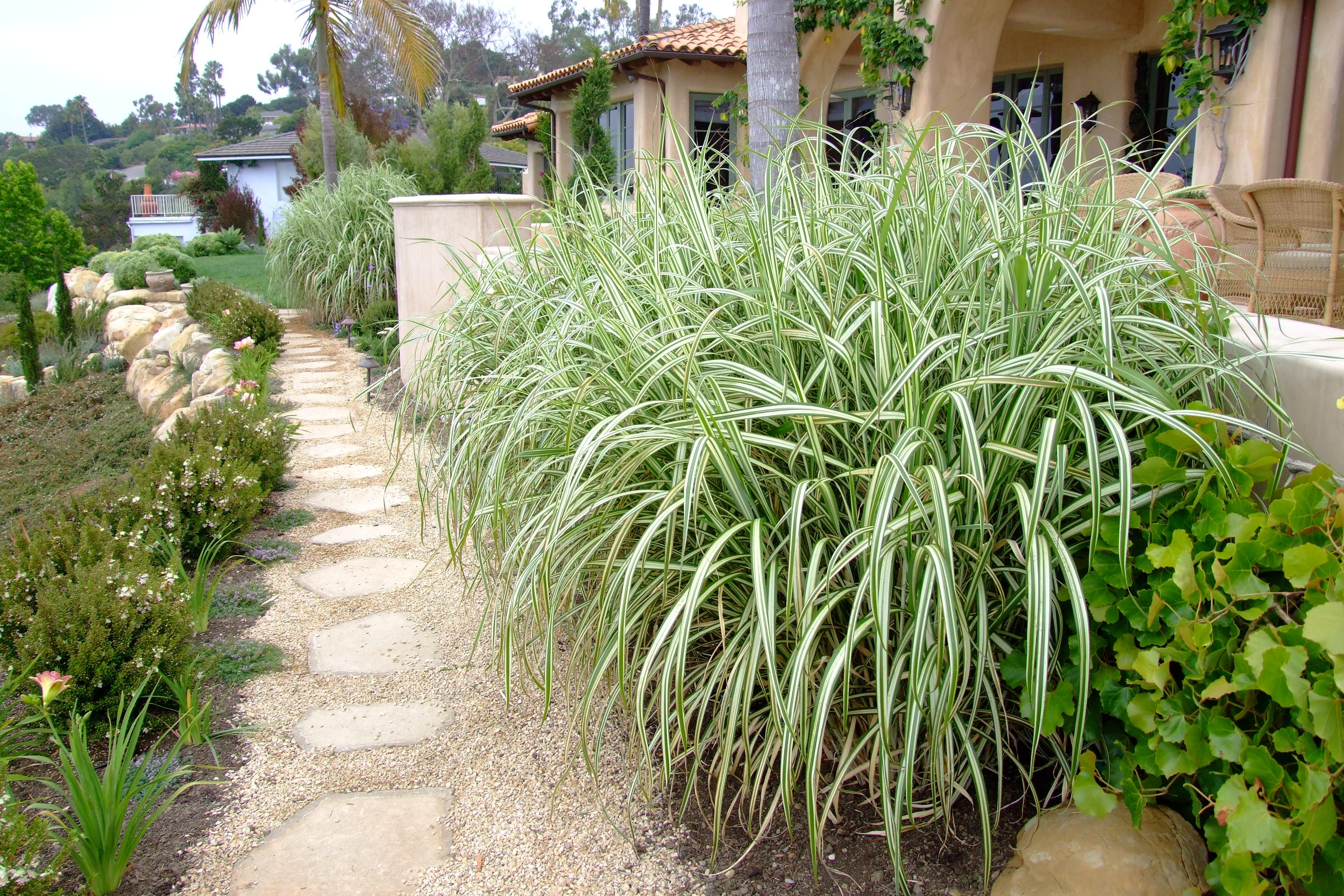 Image result for Japanese silver grass garden